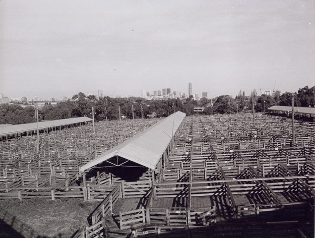 Newmarket Saleyards